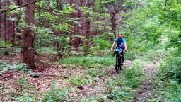 В еловом лесу.