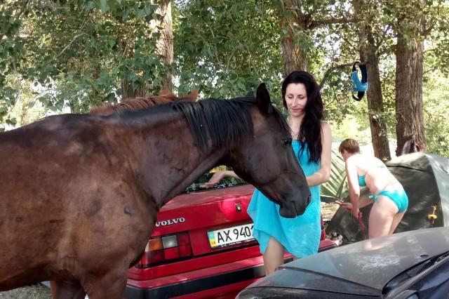 Лошадки выпрашивали еду