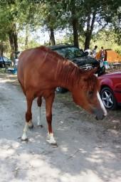 лошадка, которая утром воровала еду